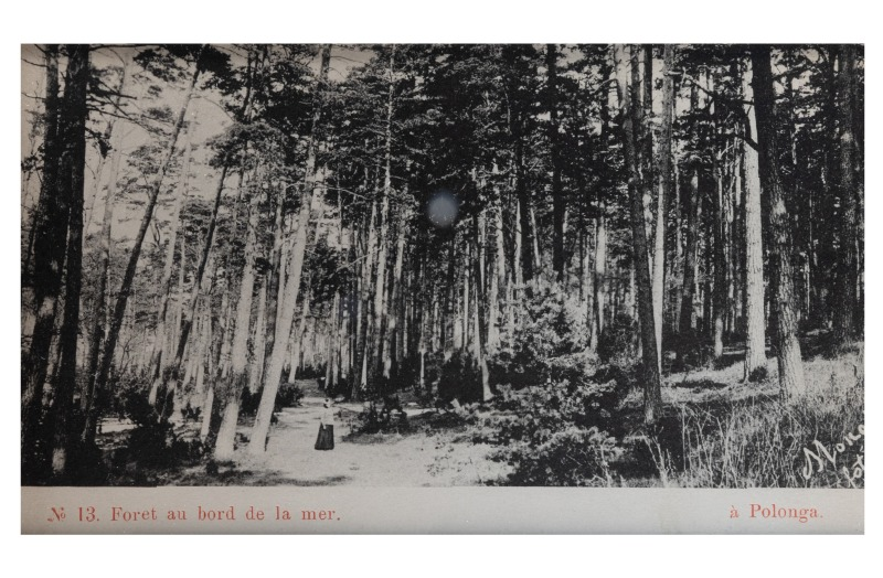 A seaside forest, Palanga, c. 1903