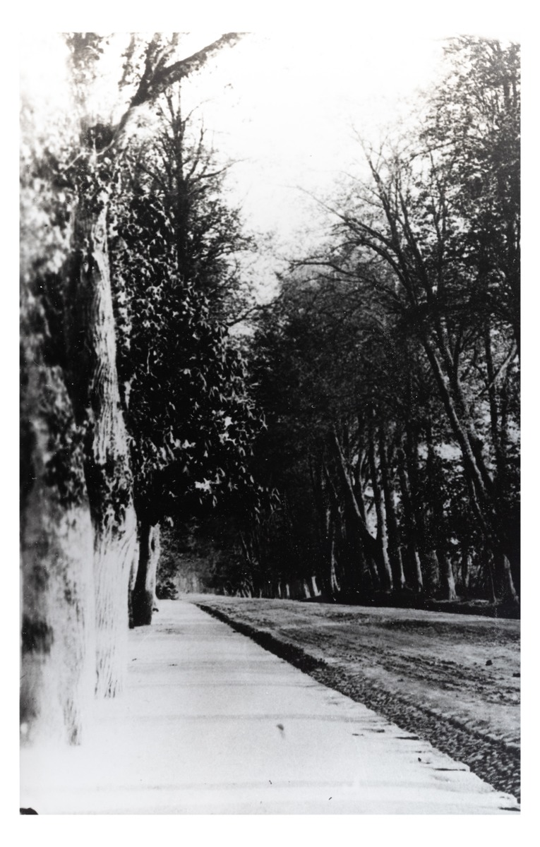 A road from Kretinga Manor Estate to the town (copy). P. Mongirdaitė's album Kretynga, p. 14, 1890