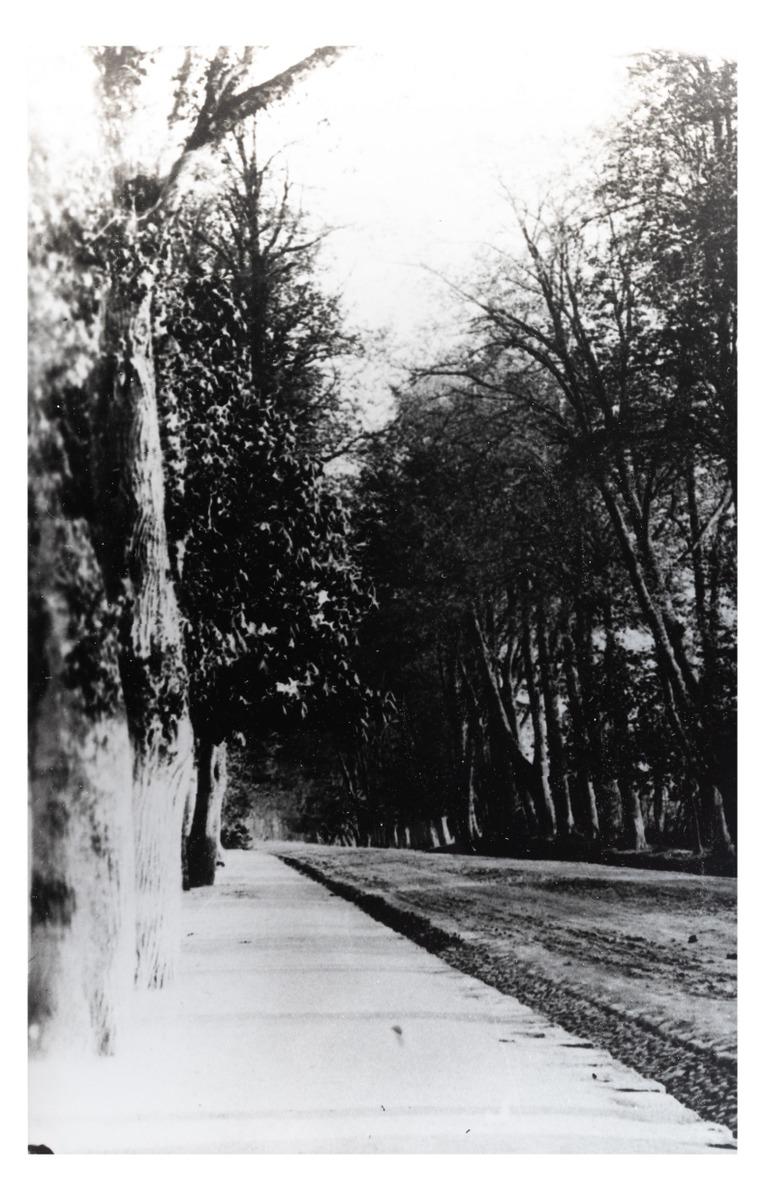 """Kelias iš Kretingos dvaro į miestą (kopija). P. Mongirdaitės albumas """"Kretynga"""", p. 14., 1890 m.<br />"""
