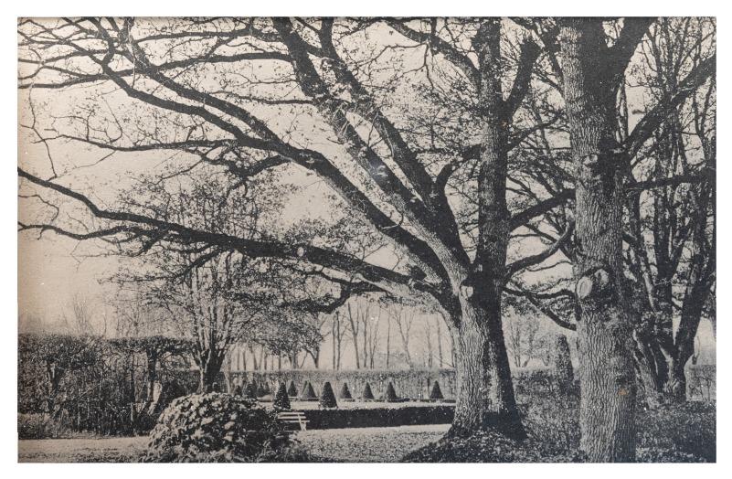 Kretingos parko ąžuolai, apie 1907 m.