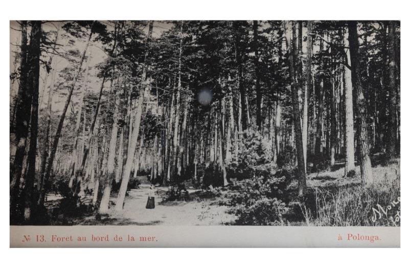 Miškas pajūryje, apie 1903 m.