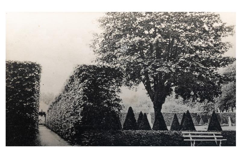 Kretingos dvaro parko liepų alėja, apie 1907 m.