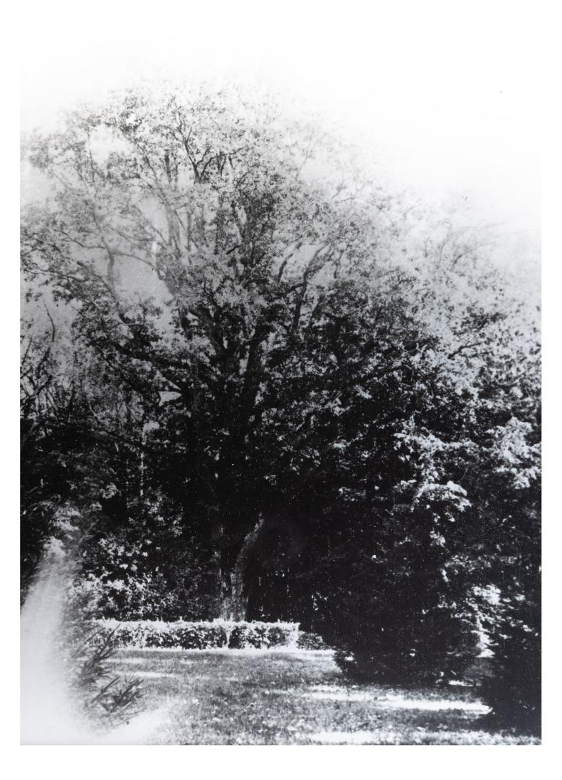 """Kretingos dvaro parko fragmentas (kopija). P. Mongirdaitės albumas """"Kretynga"""", p. 17., 1890 m."""
