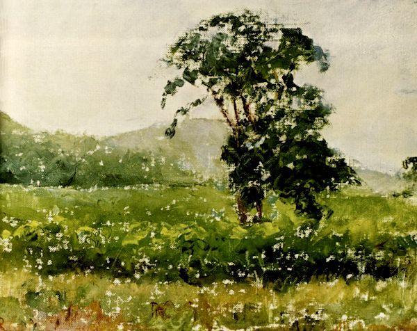 medis pievoje tomastoune2.jpg